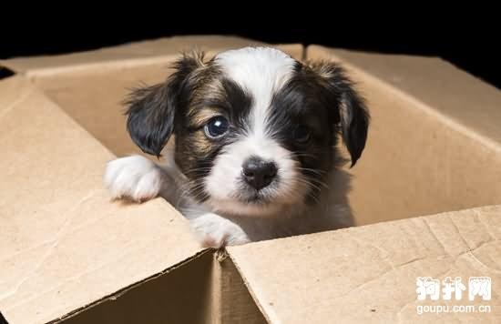 如何帮助狗狗适应新环境