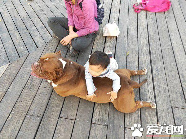 恶霸犬不要抱抱只要球球 逗趣可爱模样笑翻网友